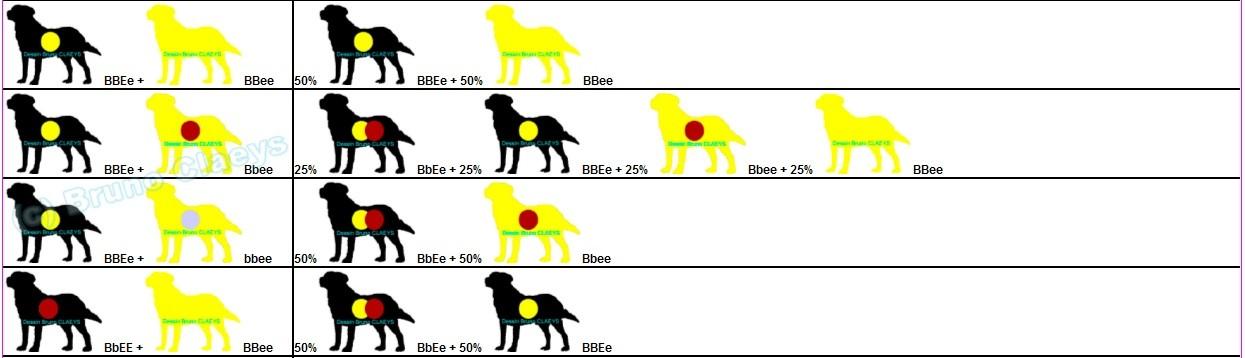 mariage-labradors-noirs-jaunes-suite