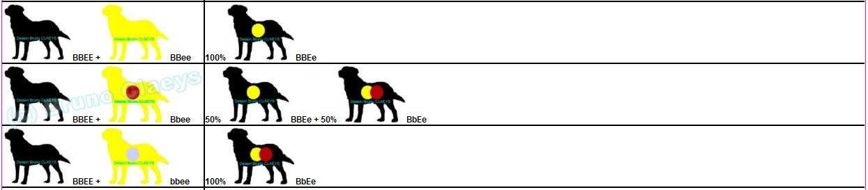 mariage-labradors-noirs-jaunes