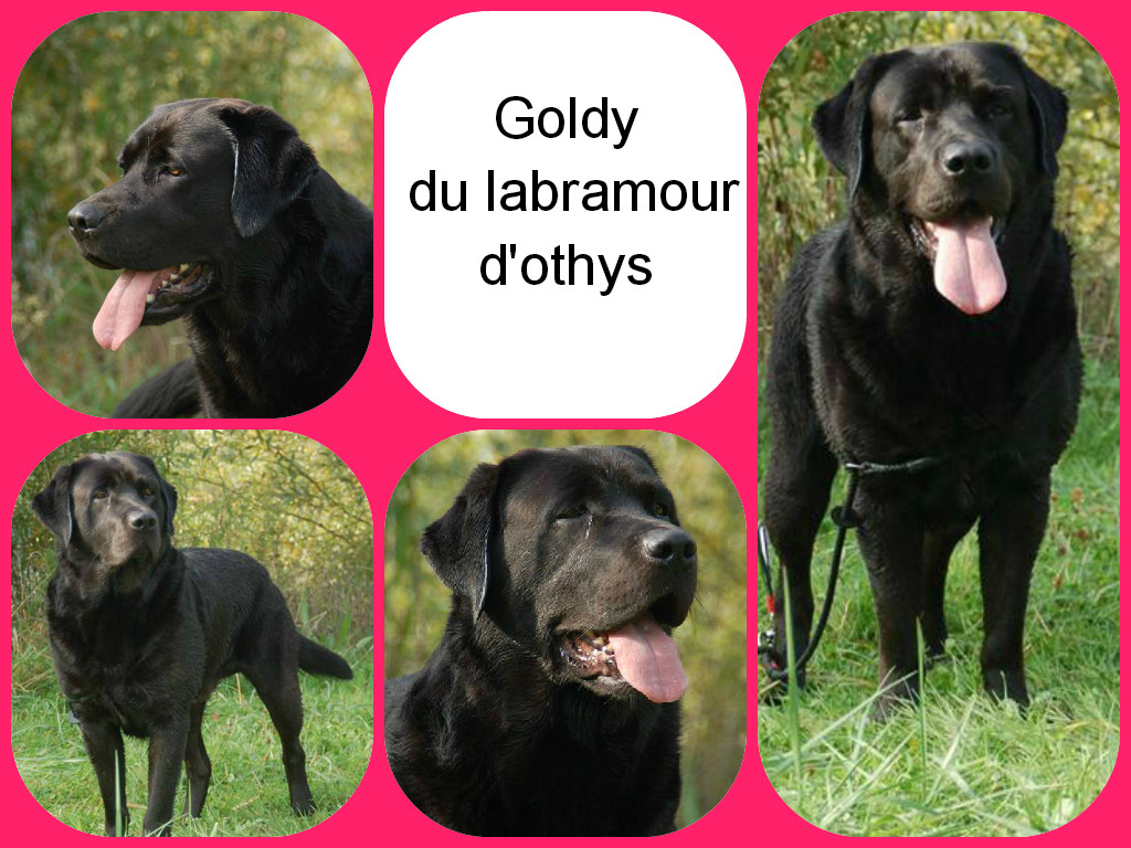 goldy 11.10.15 montage
