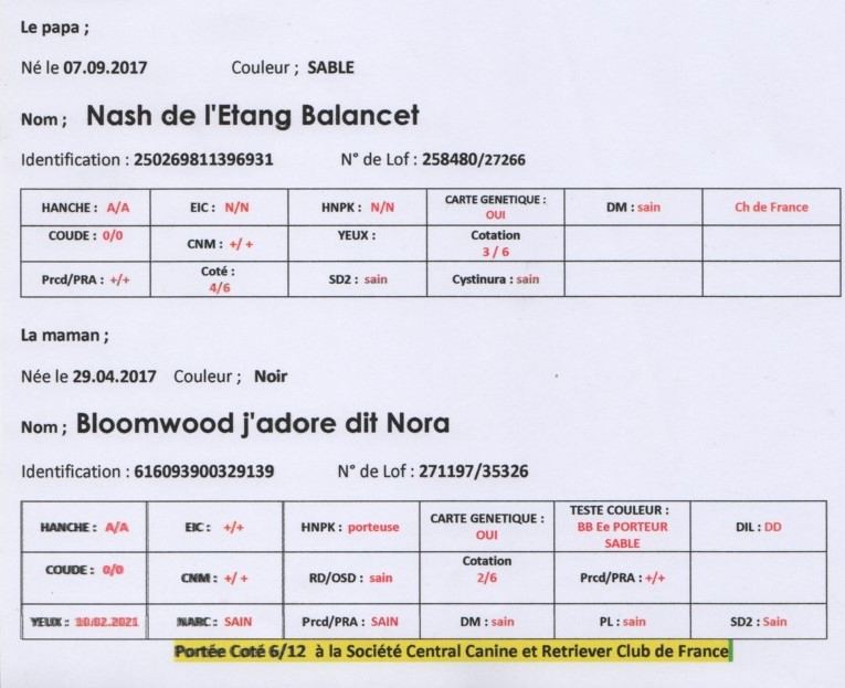 teste nora et nash 2021