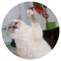 photo-rond-chat-labramour